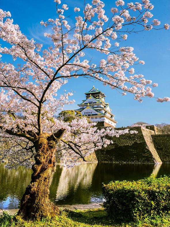 0012桜.jpg